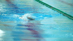 Professional male swimmer swimming in the pool stock footage