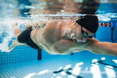 Professional male swimmer swimming in pool. Underwater shot of young sportsman practising for competition in pool Royalty Free Stock Photo