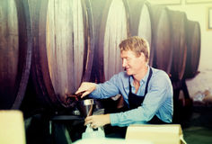 Professional man working in winery pouring wine from wood to pla Royalty Free Stock Images