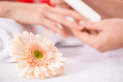Professional manicurist  making manicure. Be closer to nature. Close up of beautiful light flower lying on the table with professional manicurist making manicure Stock Image