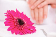Professional manicurist  making manicure Royalty Free Stock Photography