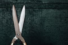 Professional new large pruner. Brilliant secateurs on a green background. Stock Photos