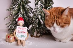 Orange and white kitty cat napping next to wooden jointed doll sitting holding a sign Merry Catmas on wintery scene. Orange and white kitty cat napping next to stock photos