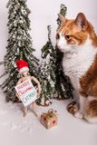 Christmas scene kitty cat sitting by wooden manikin doll holding a sign Merry CATMAS wearing a Santa Claus red hat. Christmas winter scene snow covered pine stock images