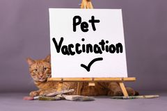 Pet vaccination check sign with orange tabby cat I the background. Orange domestic tabby cat laying behind a white canvas with Pet Vaccination check mark painted stock photo