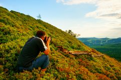 Professional photographer takes photos with mirror camera in bushes of blueberries. Dreamy landscape, spring sunrise. Stock Image