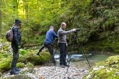 Professional photographers with cameras on tripods. Professional photographers with cameras on tripod shooting in a river Royalty Free Stock Photos