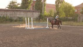 Professional rider on a horse jumps over a barrier stock video
