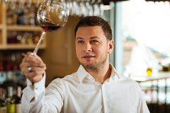 Professional smart sommelier working in the restaurant. Favourite job. Professional smart sommelier checking the quality of wine while working in the restaurant royalty free stock images
