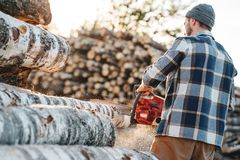 Professional strong lumberman wearing plaid shirt sawing tree with chainsaw for work on sawmill. Sawdust fly apart royalty free stock images