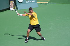Professional Tennis Player - David Nalbandian Stock Photos