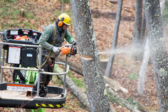 Professional Tree Cutter. A professional tree cutter or lumberjack at work Stock Photography