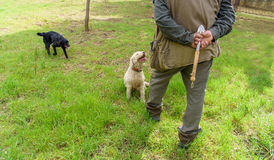 Professional truffle hunter and his dogs search for truffles Stock Photos