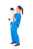 Vet doctor dog. Professional vet doctor holding a dog isolated on white stock photos