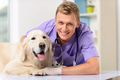 Professional vet examining a dog Stock Photography