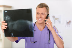 Professional vet involved in work Royalty Free Stock Photos