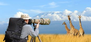 Professional wildlife photographer Stock Image
