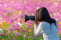 Professional woman photographer taking camera outdoor portraits with prime lens in the photography flower cosmos meadow nature.