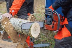Professional woodcutter saws a log Royalty Free Stock Photo