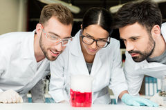 Professional young chemists looking at flask with reagent in laboratory. Team of professional young chemists looking at flask with reagent in laboratory Royalty Free Stock Photo
