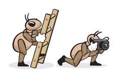 Professione 5 della formica Fotografia Stock