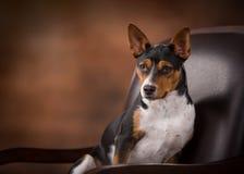 Professioneel hondportret stock fotografie