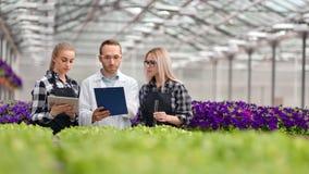 Professionele agronomielandbouwer en wetenschappergroep die bij serre samenwerken stock footage