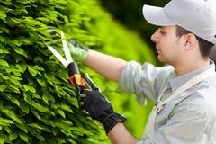 Professionele tuinman die een haag snoeien stock afbeeldingen