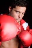 Professioneller männlicher Boxer Stockbild