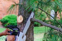 Professionelln klipper träd genom att använda en chainsaw royaltyfria foton