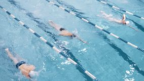 Professionellsimmare för bästa sikt som fyra svävar på spår i simbassängen som utför krypandestil stock video