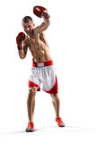 Professionl boxer is isolated on white Royalty Free Stock Photography
