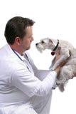 Professionnel médical Image libre de droits