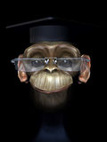 Professor chimp. Funny 3d character on black Royalty Free Stock Image