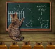 Professor do gato e seus alunos imagens de stock royalty free