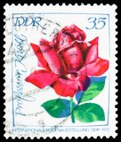 Professor Knoll, International Rose Exhibition serie, circa 1972. MOSCOW, RUSSIA - MARCH 30, 2019: A stamp printed in Germany, Demoscratic Republic shows stock image