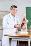 Professor Looking Away While Analyzing Anatomical Royalty Free Stock Photo