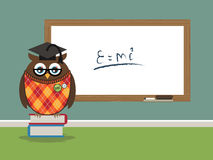Professor owl Stock Image