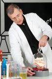 Professor prüft mit Süßigkeit Lizenzfreies Stockfoto
