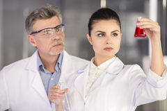 Professor. Senior chemistry professor and his assistant looking on flask with red fluid  in  laboratory Stock Photos