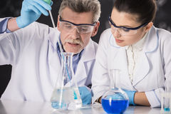 Professor. Senior chemistry professor and his assistant working  in  laboratory Royalty Free Stock Photography