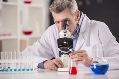 Professor. Senior chemistry professor and his assistant working in laboratory stock photography