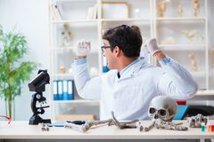 The professor studying human skeleton in lab Royalty Free Stock Photo