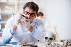 The professor studying human skeleton in lab. Professor studying human skeleton in lab stock photos