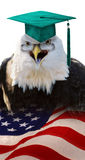Proffessor Eagle. Stock Photography