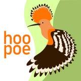 Profiel van de de illustratie vlakke stijl van de Hoopoevogel het hoofd vector Stock Fotografie