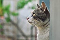 Profiel van de kat die omhoog eruit zien Stock Afbeelding
