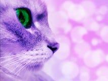 Profiel van de katten` s snuit met groene ogen op een onscherpe achtergrond stock afbeeldingen