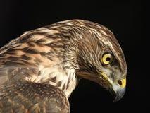 Profiel van de mooiste vogel in de wereld stock afbeeldingen