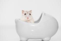 Profiel van een leuke hamster Stock Foto